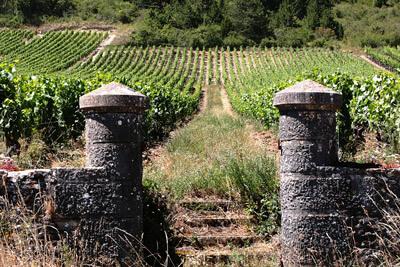 Bourgogne, vins d'exception